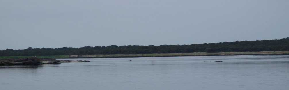 Meant to show scale, but if you look closely, you can see heron flying along the water and a caimen swimming as well.
