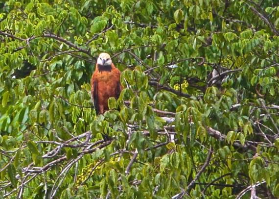 Eagle (photo by Jerry Peek).