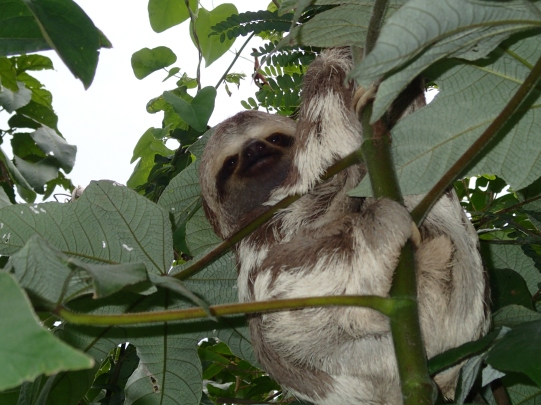 A friggin baby sloth, thats what!