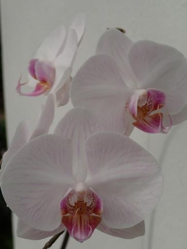 Just one of a billion flower photos Michaela took.
